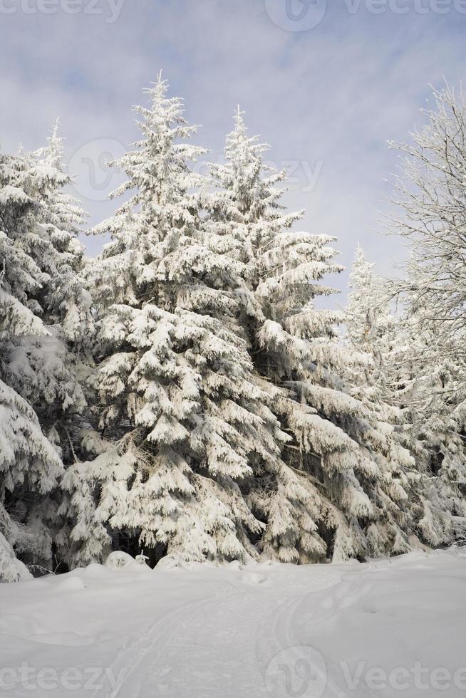 bem-vindo à floresta de inverno foto