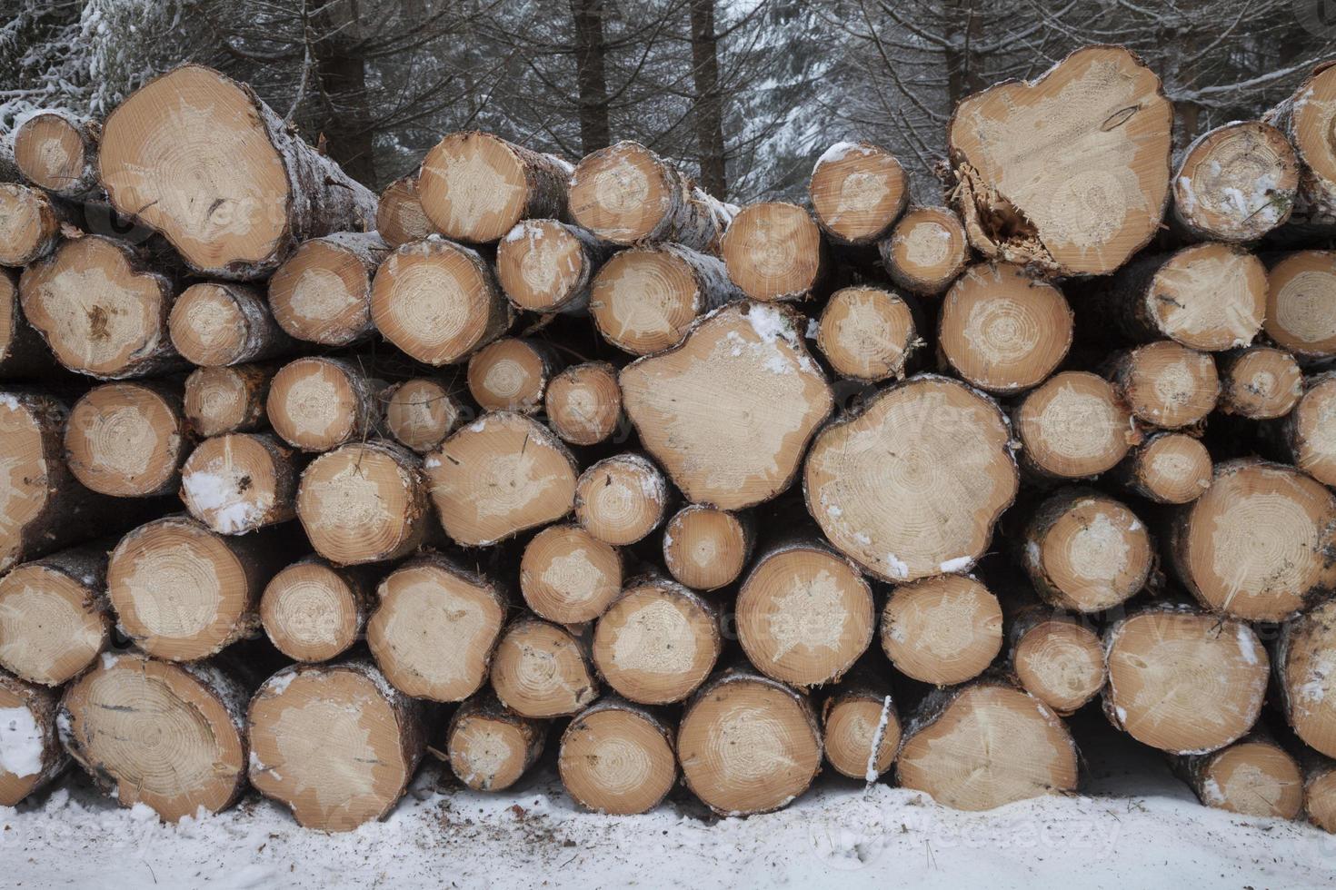 alemanha, troncos de árvore no inverno foto