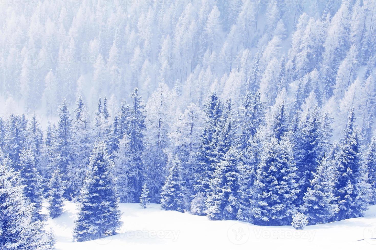 floresta de inverno nas montanhas foto