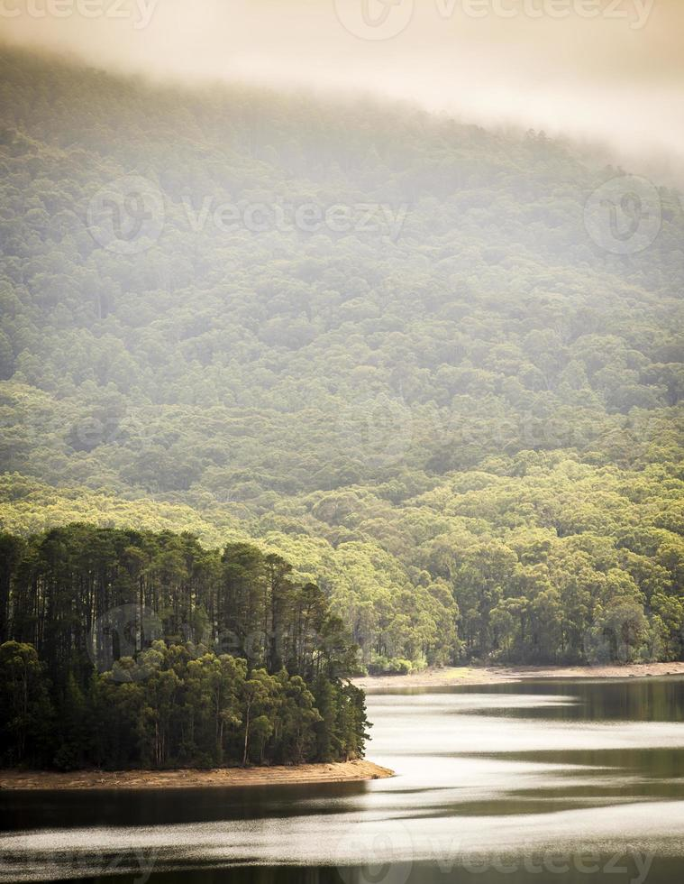floresta do lago foto