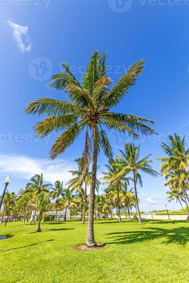 bela praia de miami com palmeiras foto
