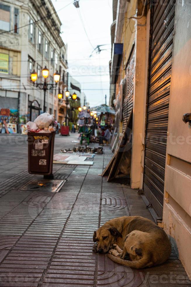 cachorro santo domingo foto