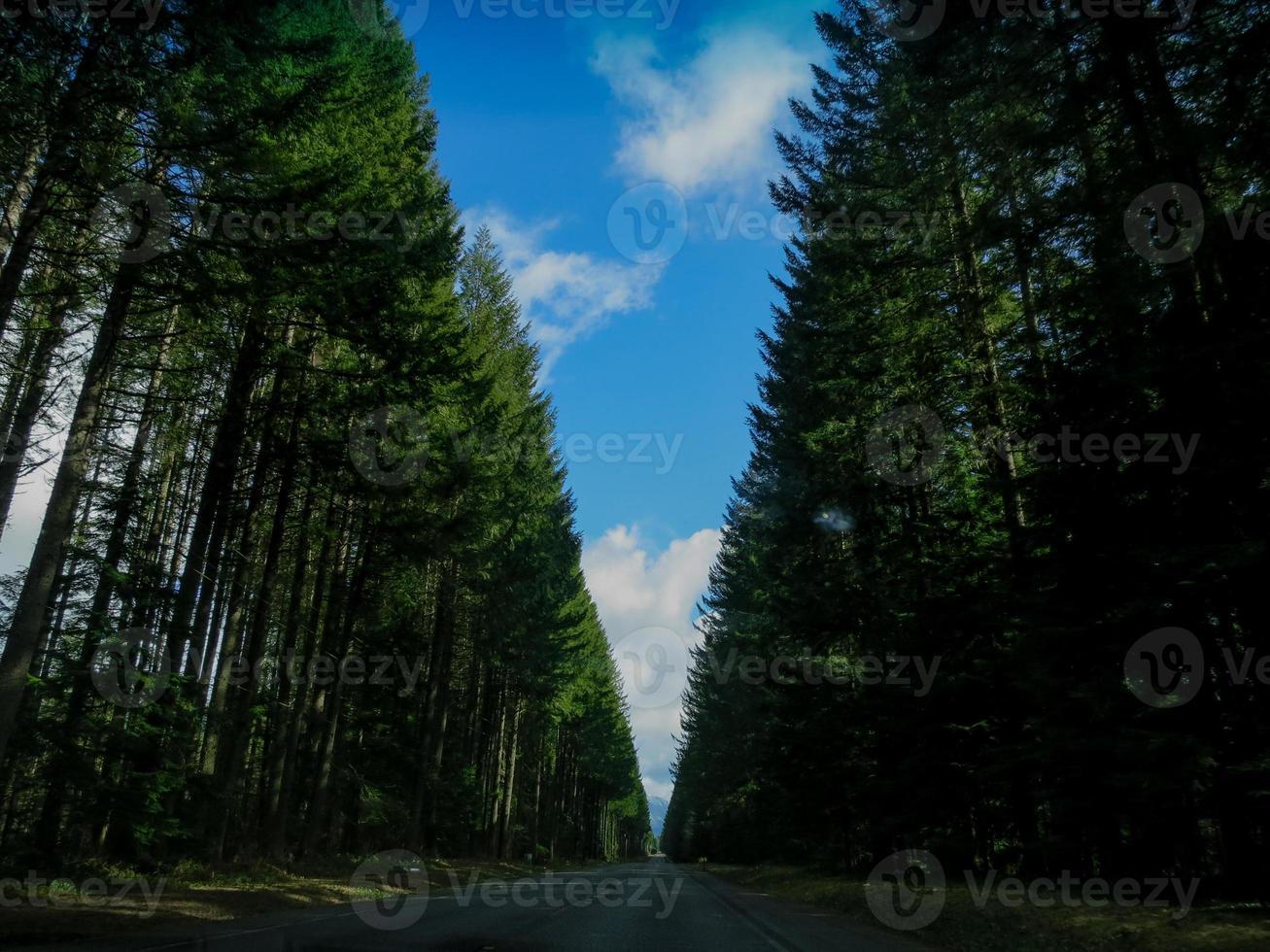 longa fila de árvores foto