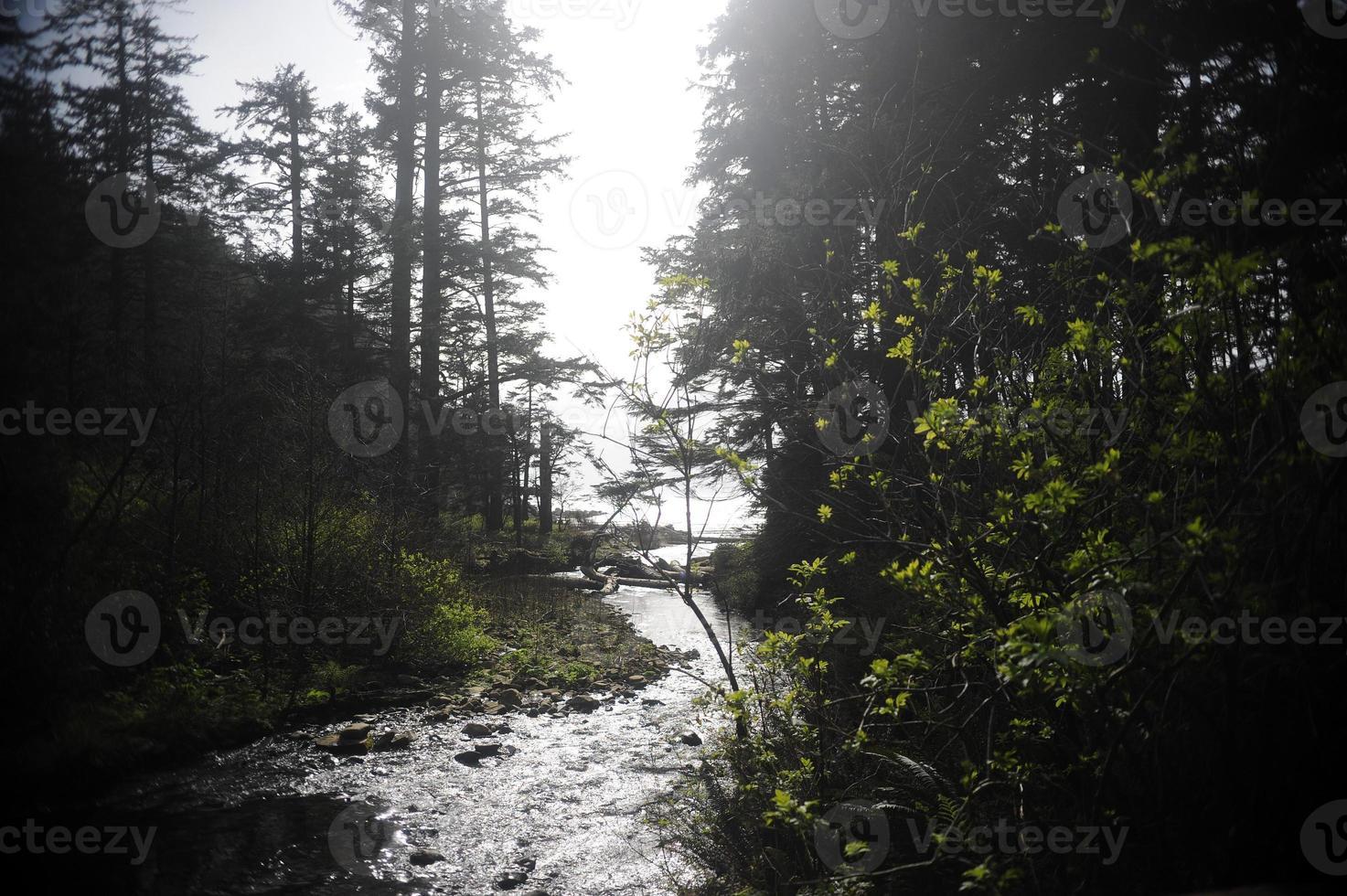 pacífico noroeste douglas abetos foto