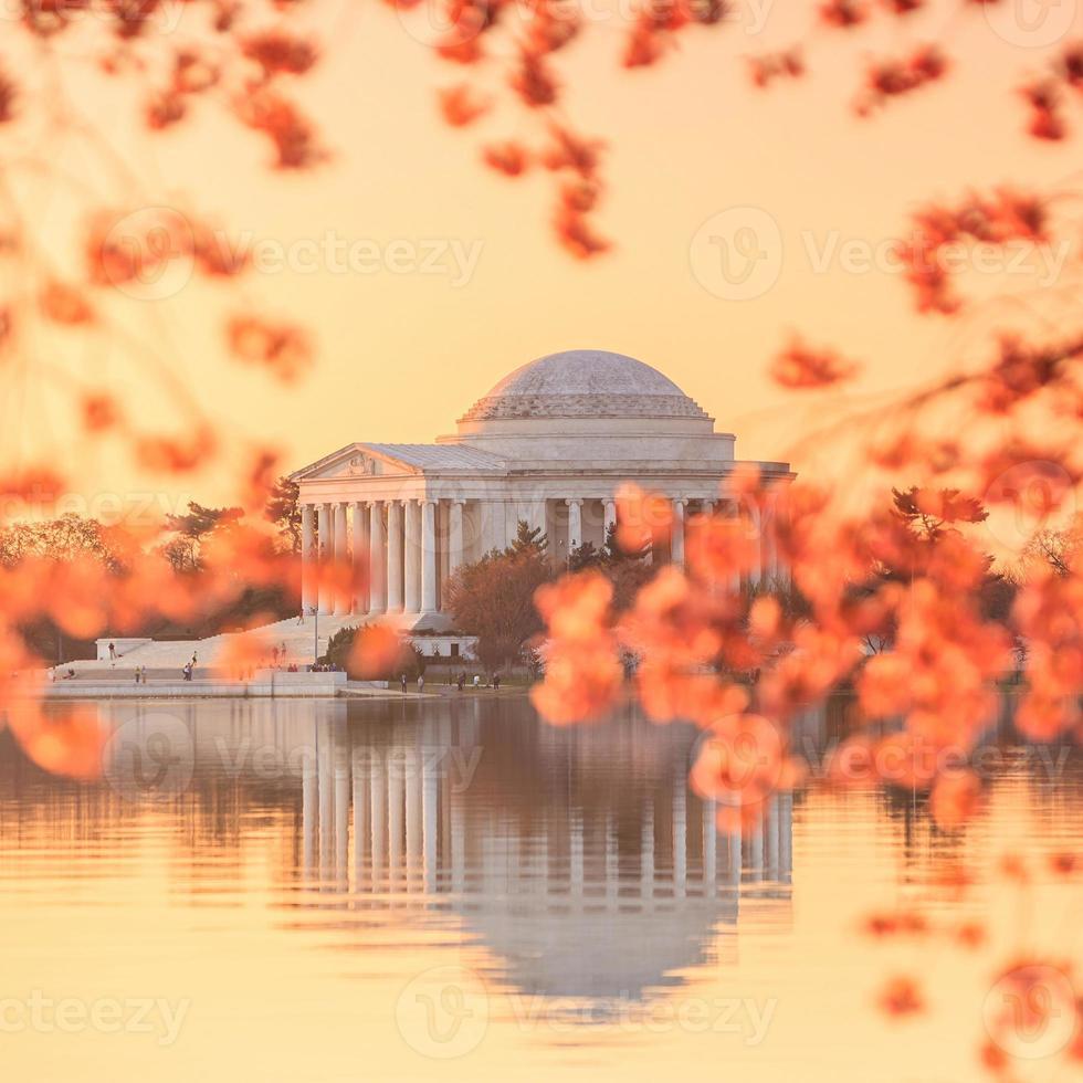 memorial de jefferson durante o festival da flor de cerejeira foto
