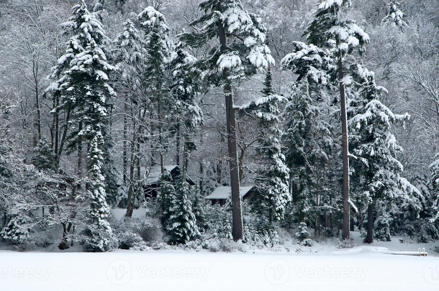cabanas na floresta foto
