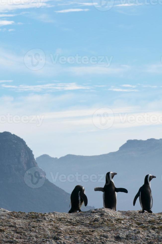 três pinguins foto