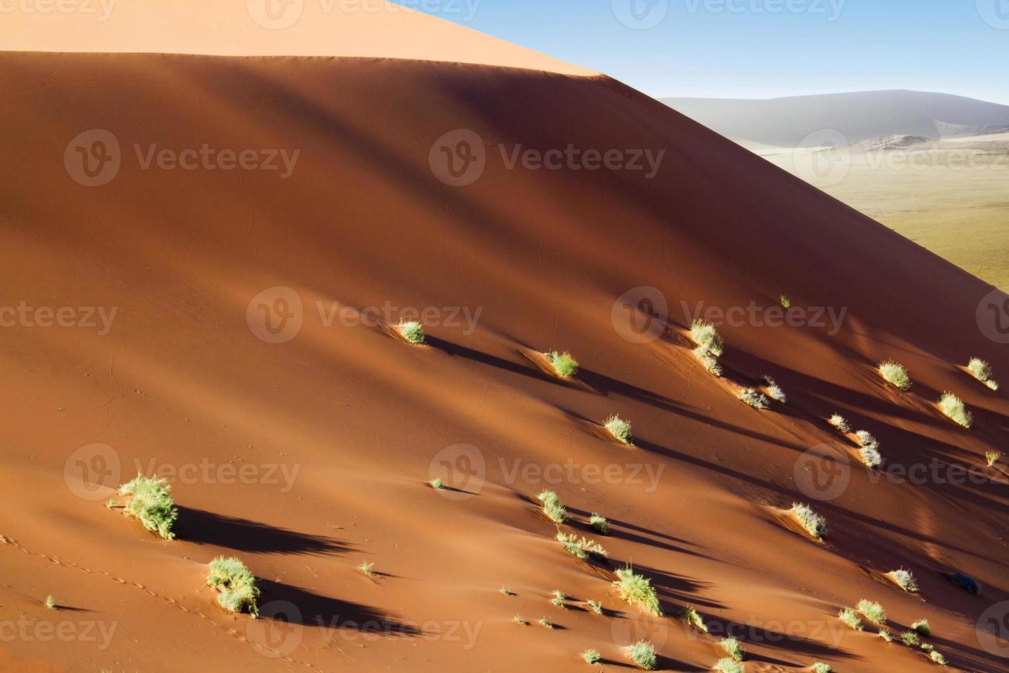 sossusvlei dunas arbustos foto