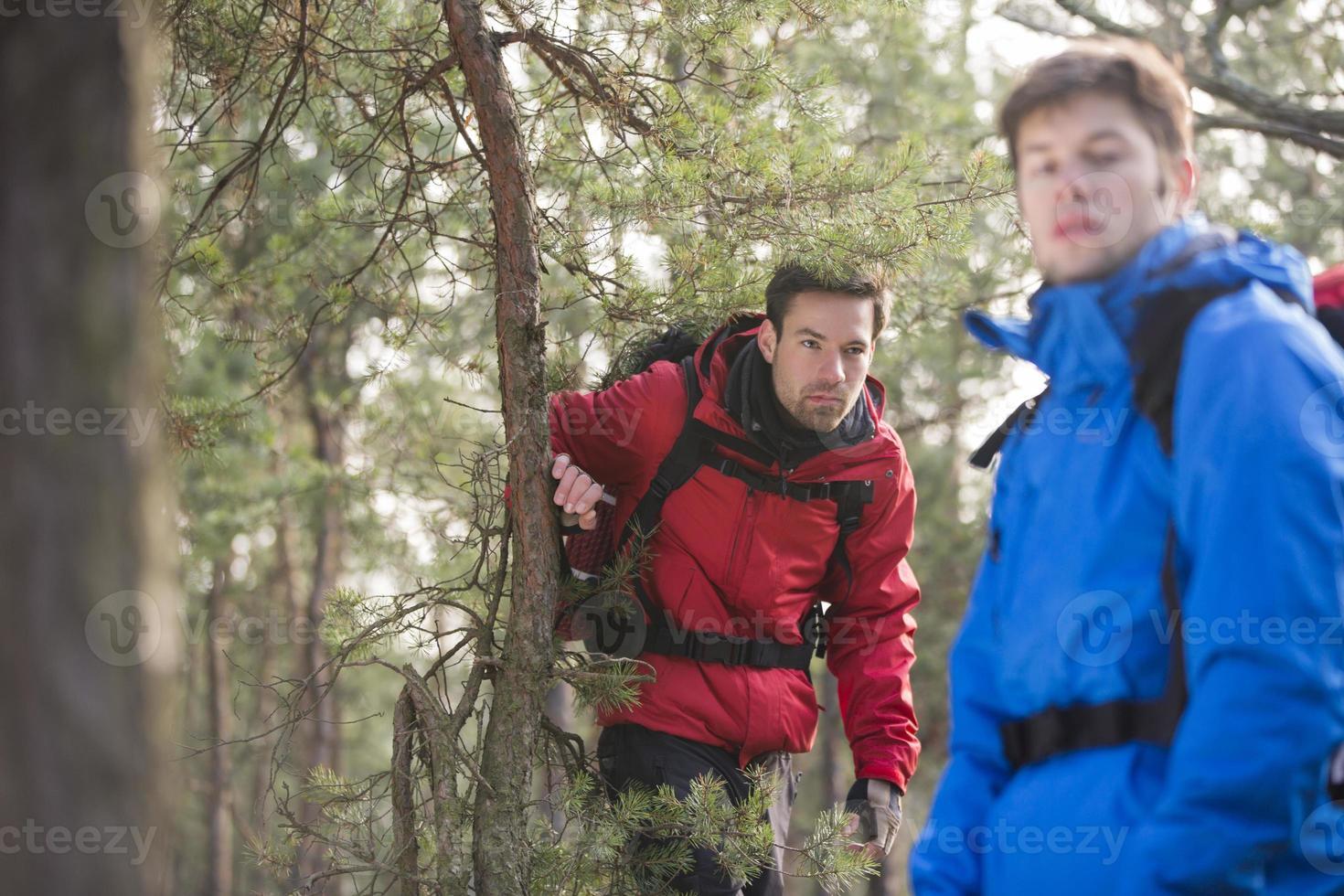 caminhadas na floresta foto