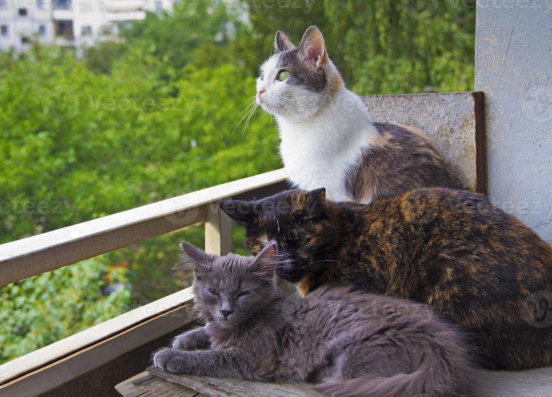 três gatos sentados juntos na varanda foto