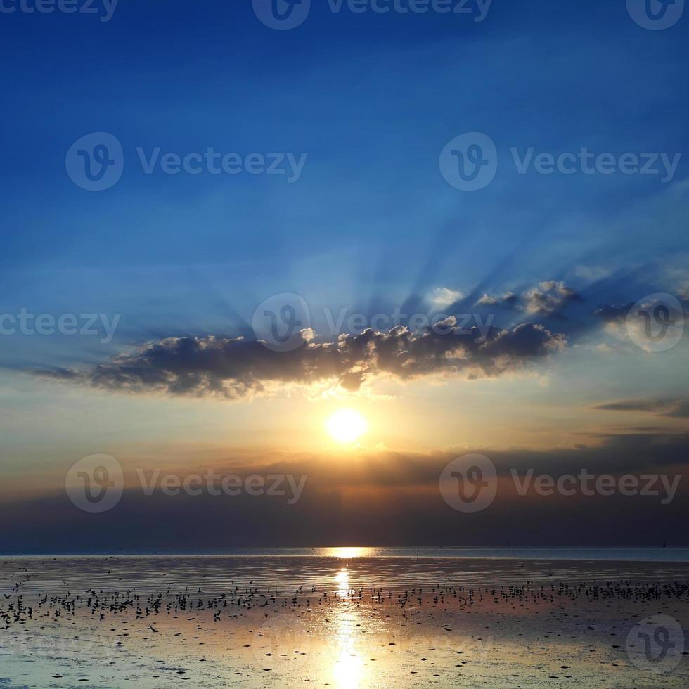 pôr do sol sobre gaivota foto
