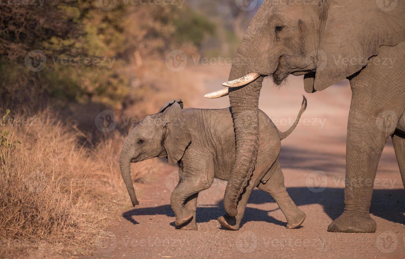 mãe e filhote de elefante foto