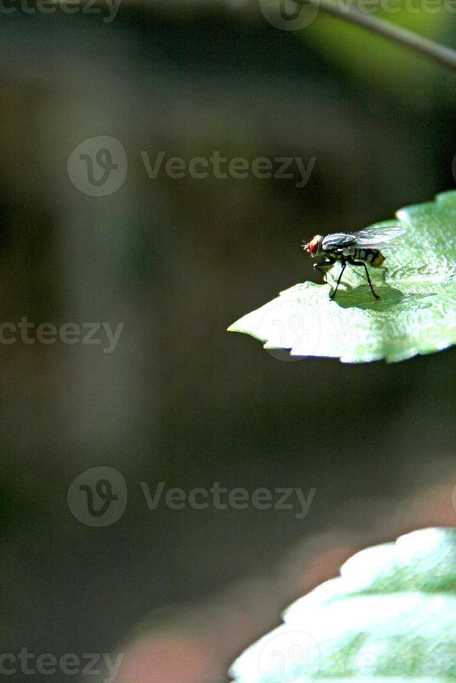 mosca na folha foto