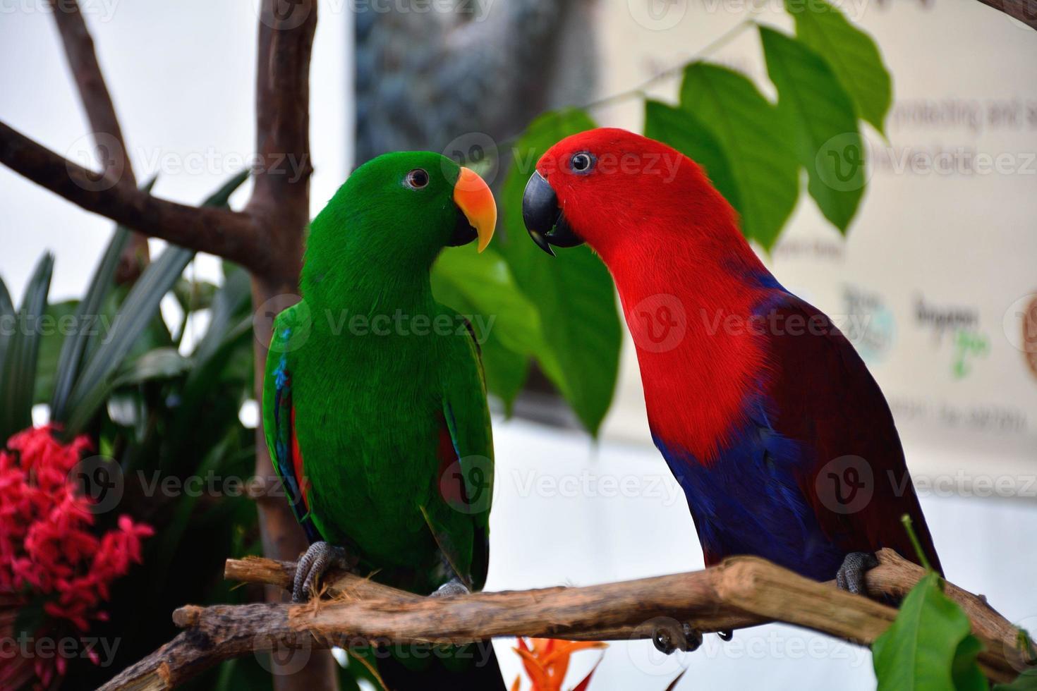 imagem de papagaios foto