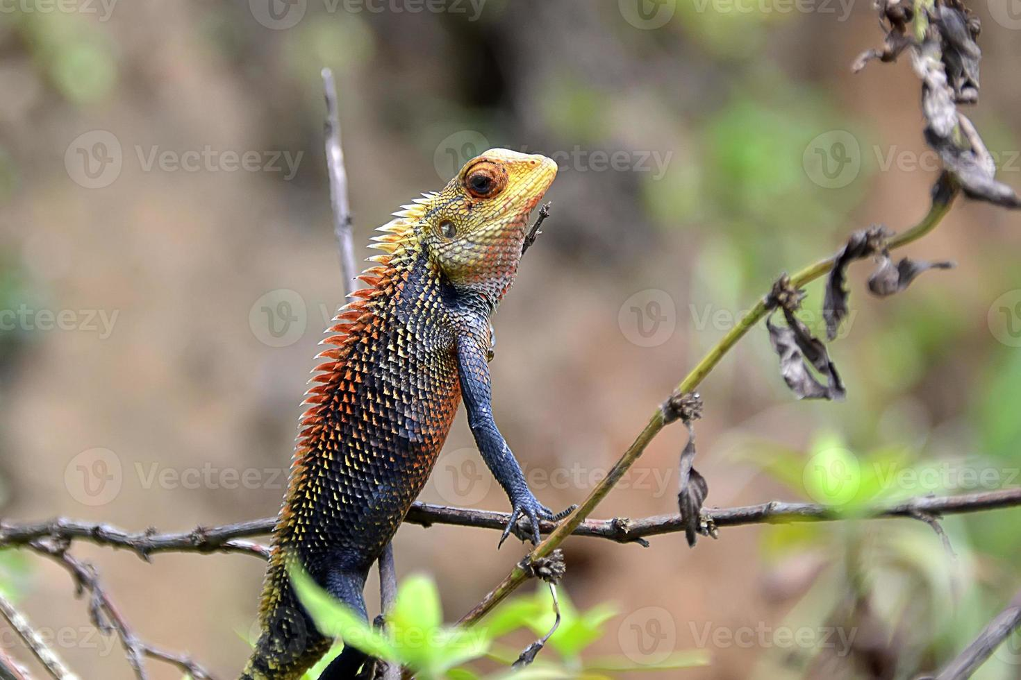 camaleão pequeno cor sentado na fotografia de detalhe de grama foto