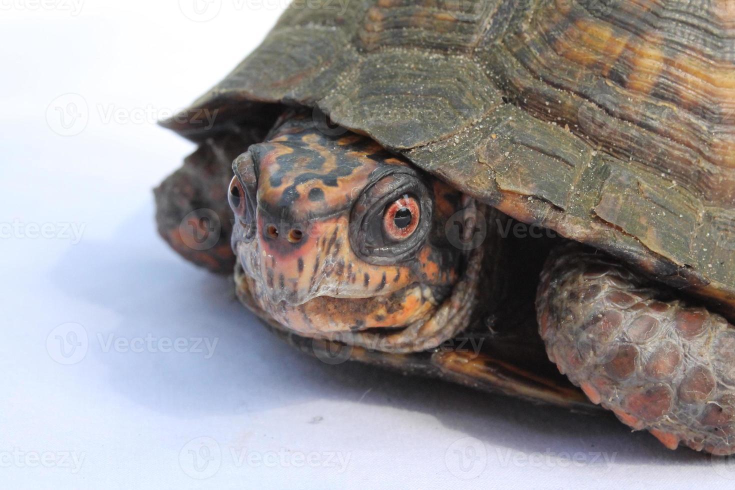 tartaruga de dia ensolarado foto