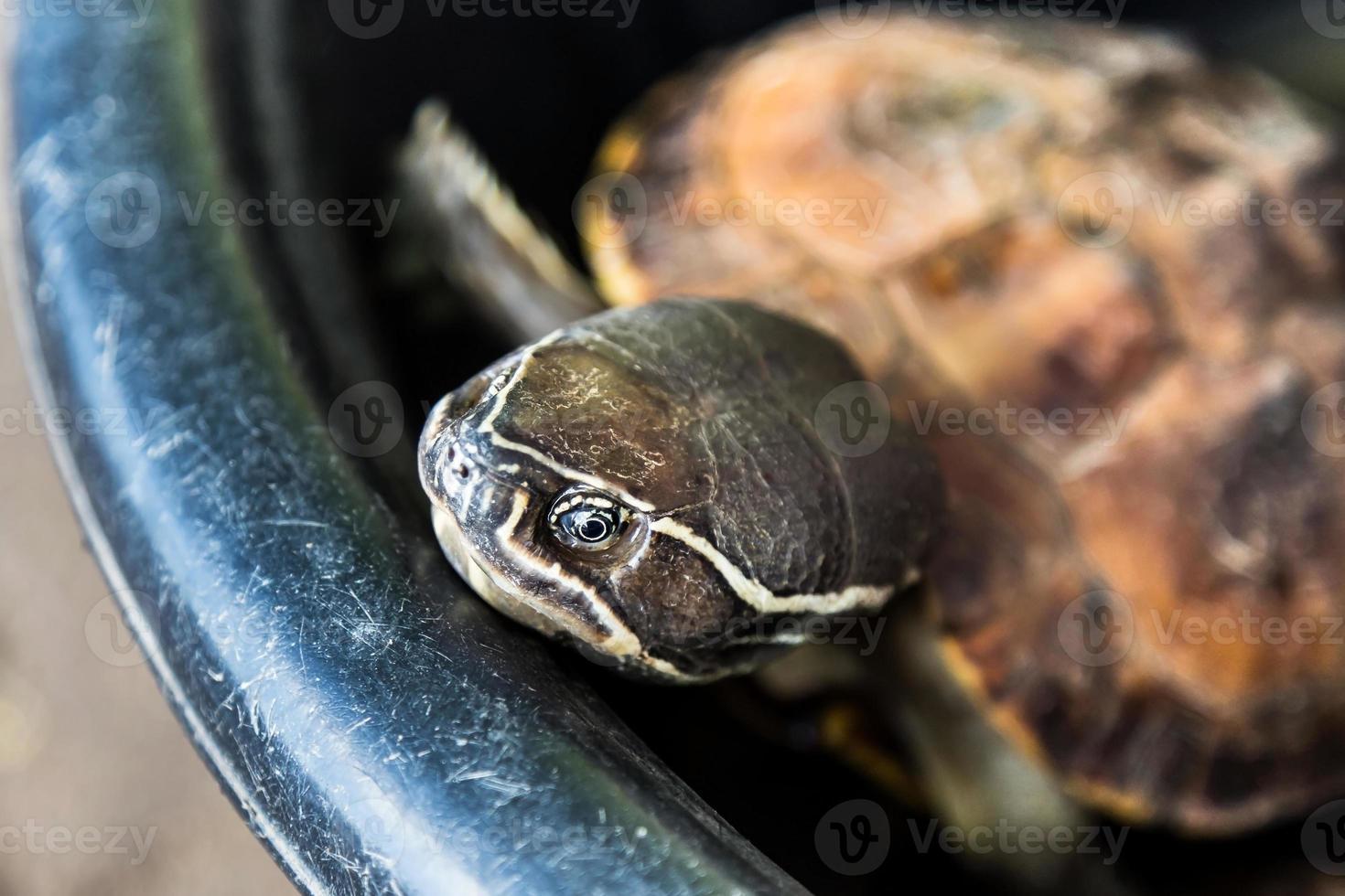 closeup cabeça de uma tartaruga foto