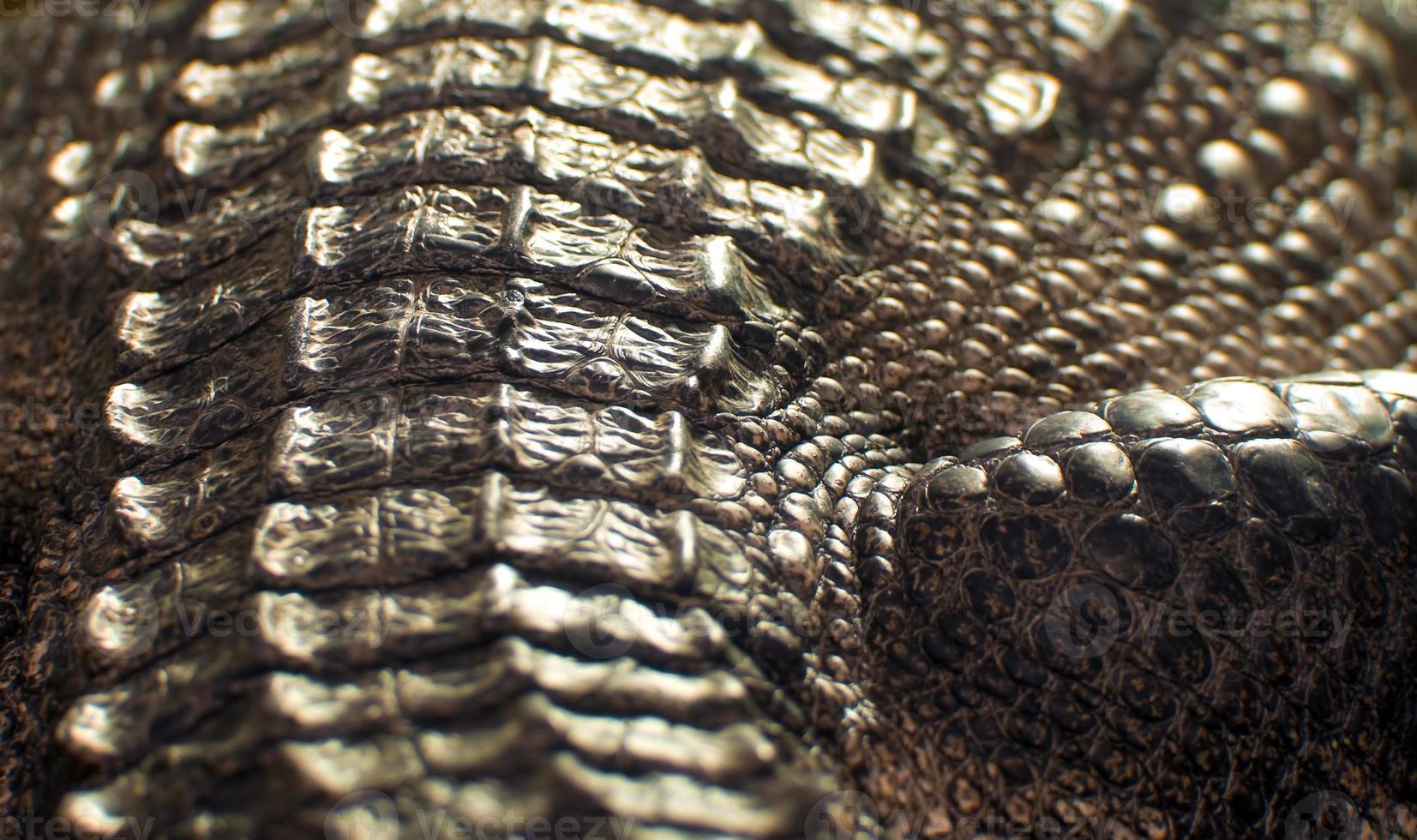 textura de couro de crocodilo foto