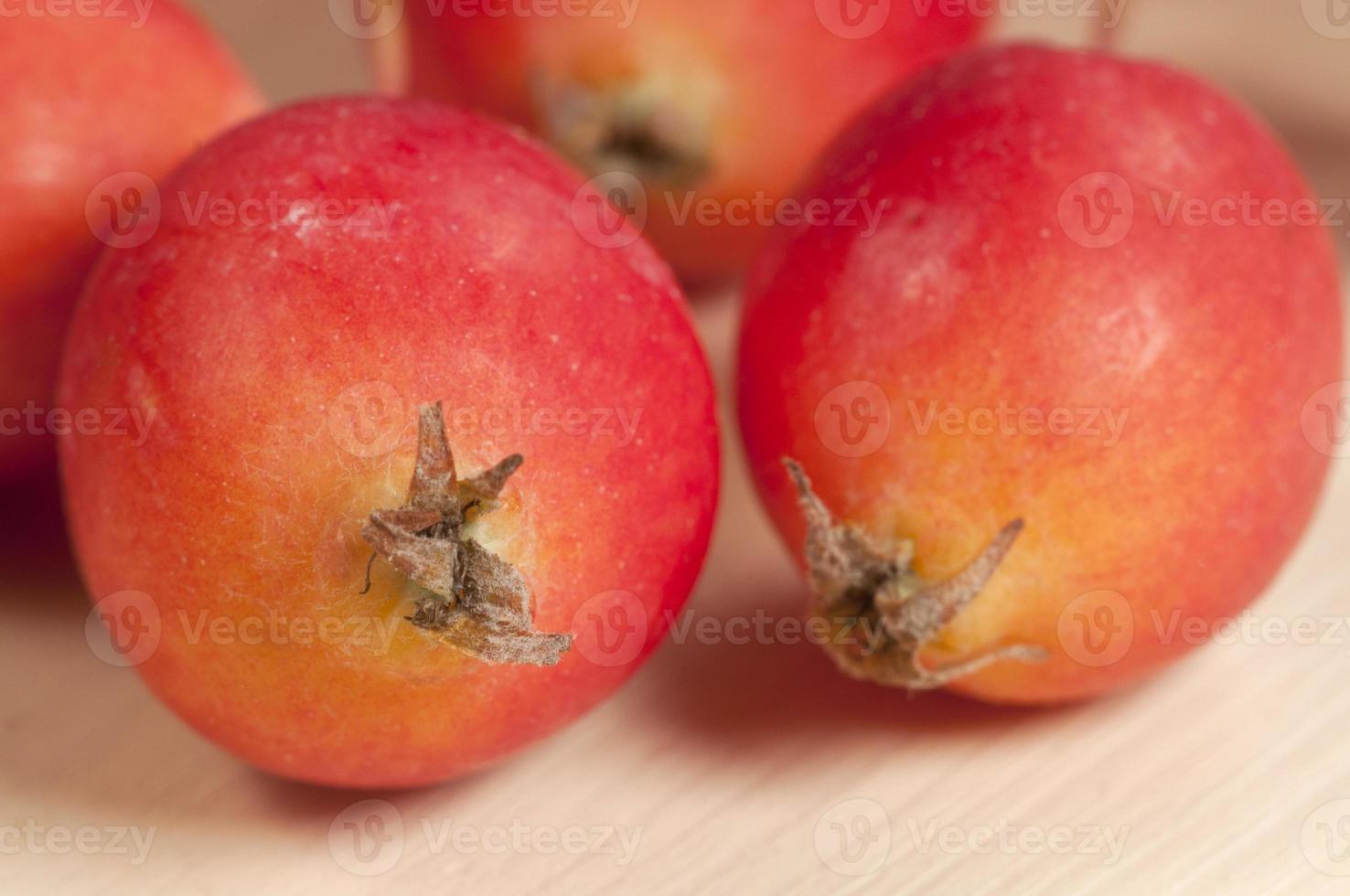 maçãs de caranguejo (paraíso) foto