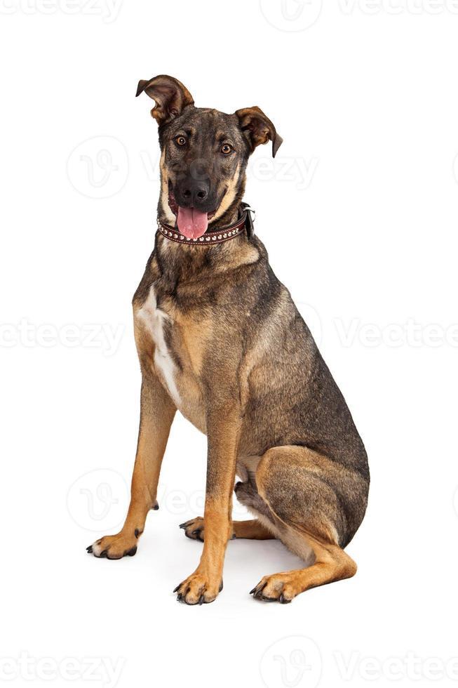 pastor mistura cão feliz foto