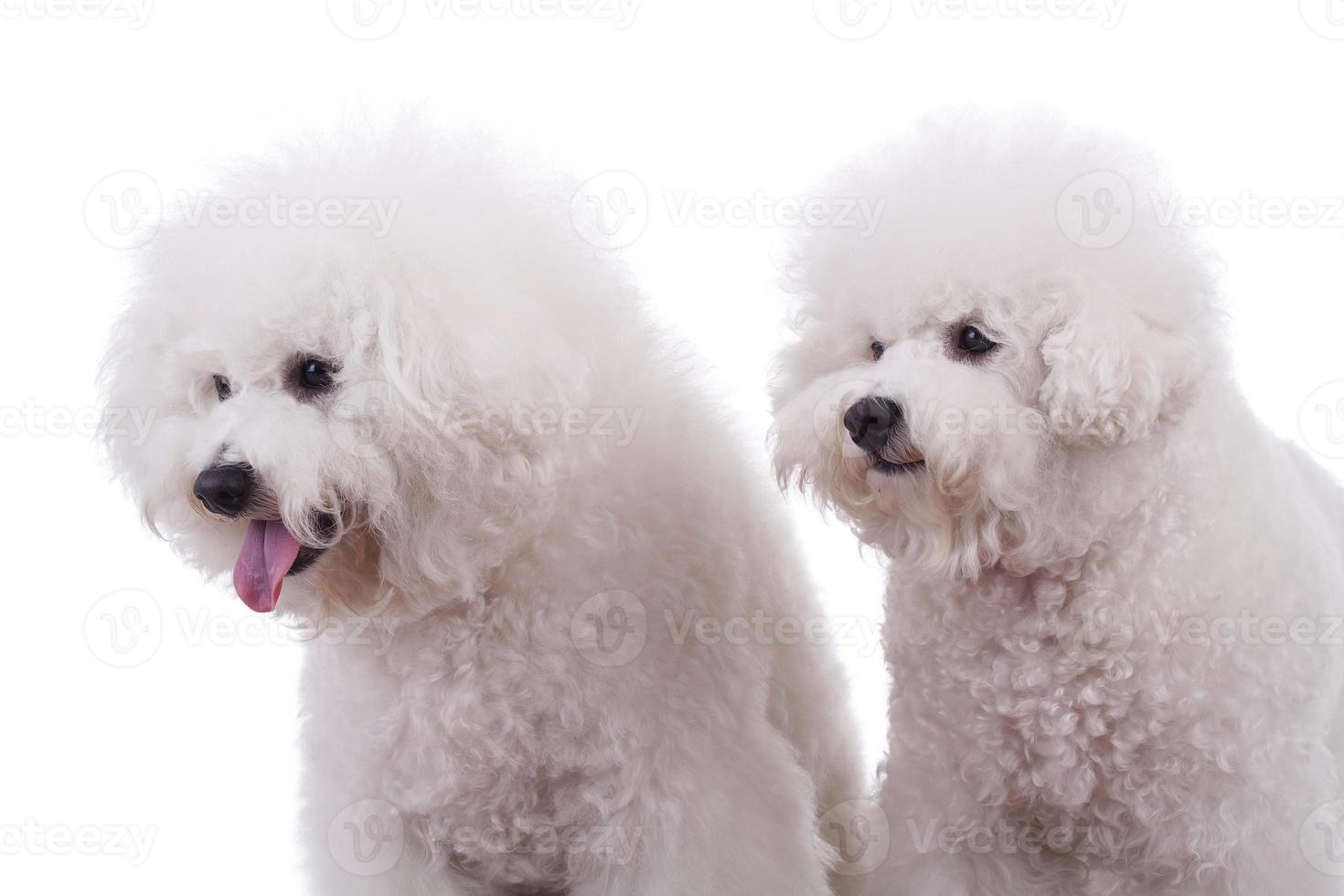 cães curiosos foto