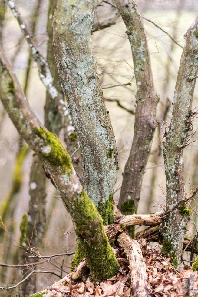 árvores foto