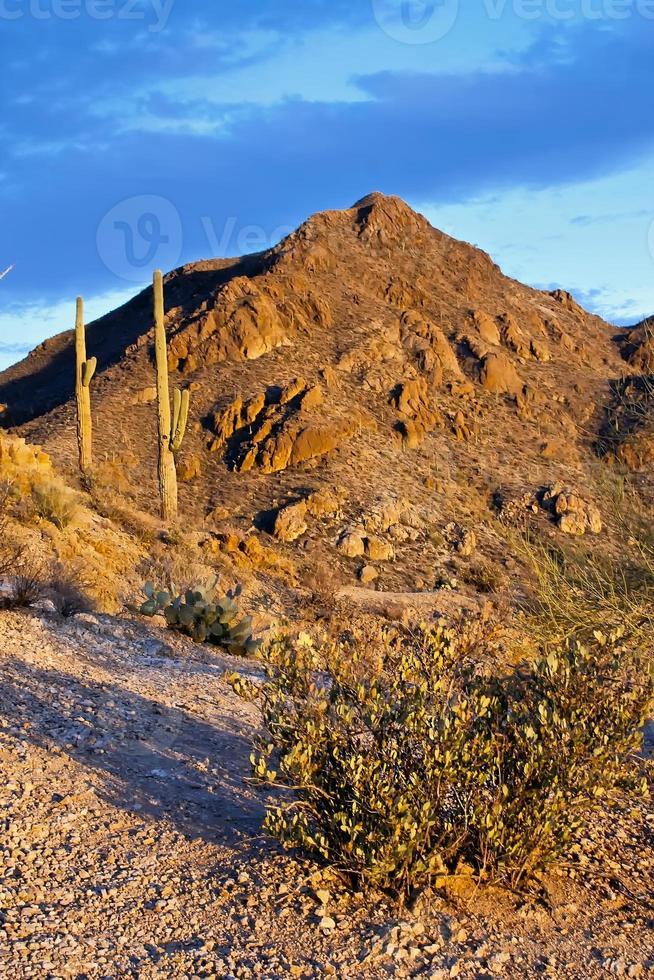 paisagem do deserto do Parque Nacional do Saguaro foto