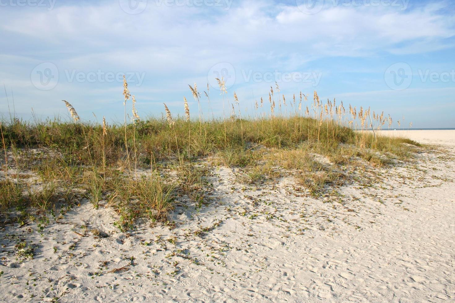 duna da praia foto