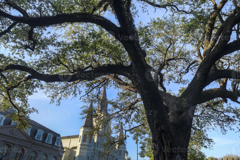 nova orleans jackson square carvalho vivo e st. catedral de louis foto