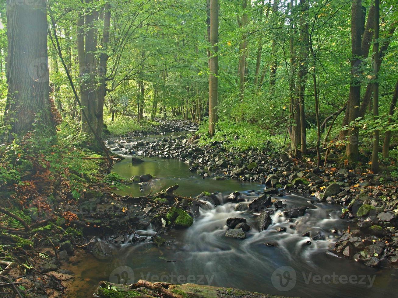 margem do rio sob as árvores no rio da montanha, rochas cobertas de musgo foto