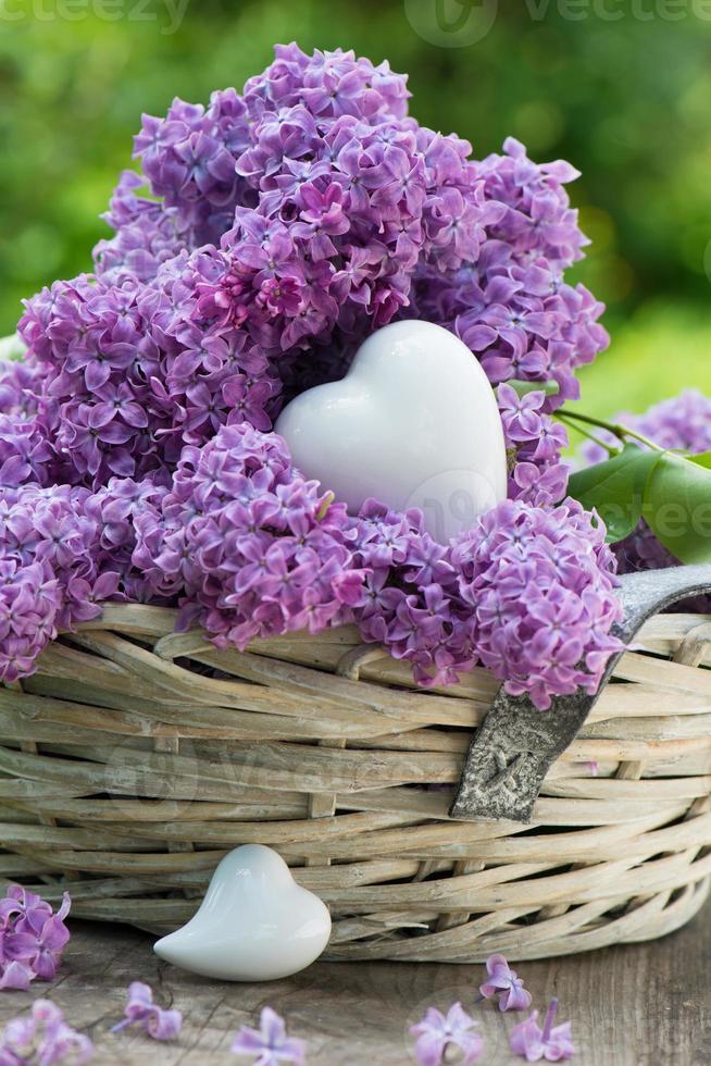 corações com lilás foto