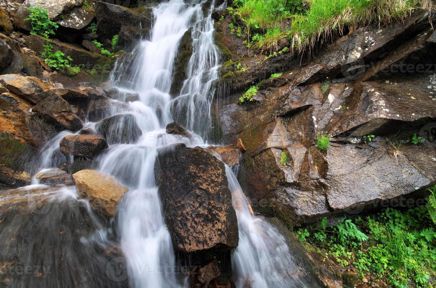 riacho da primavera foto
