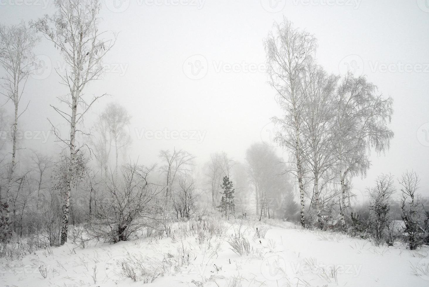 paisagem de inverno nebuloso foto