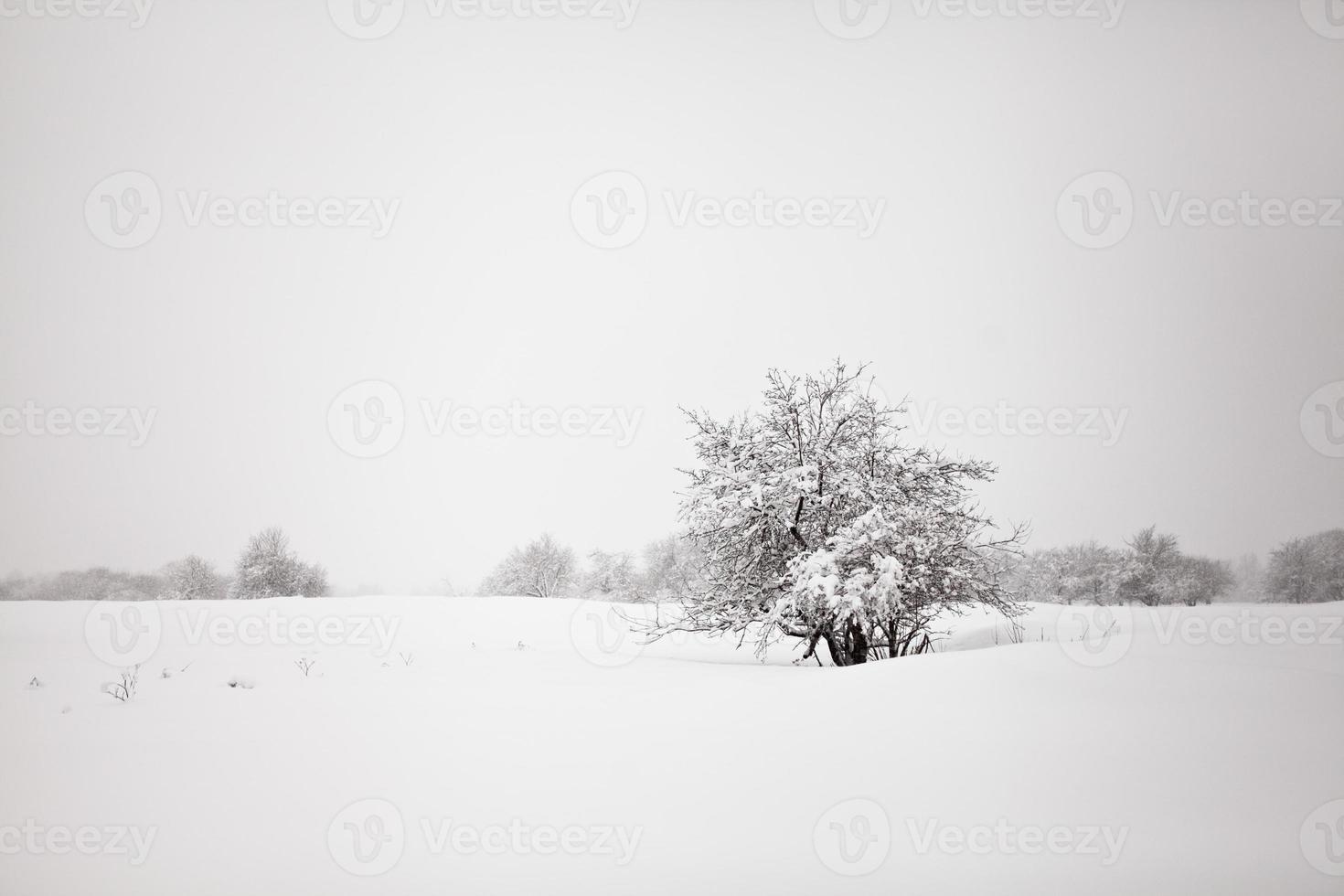 paisagem minimalista do inverno foto