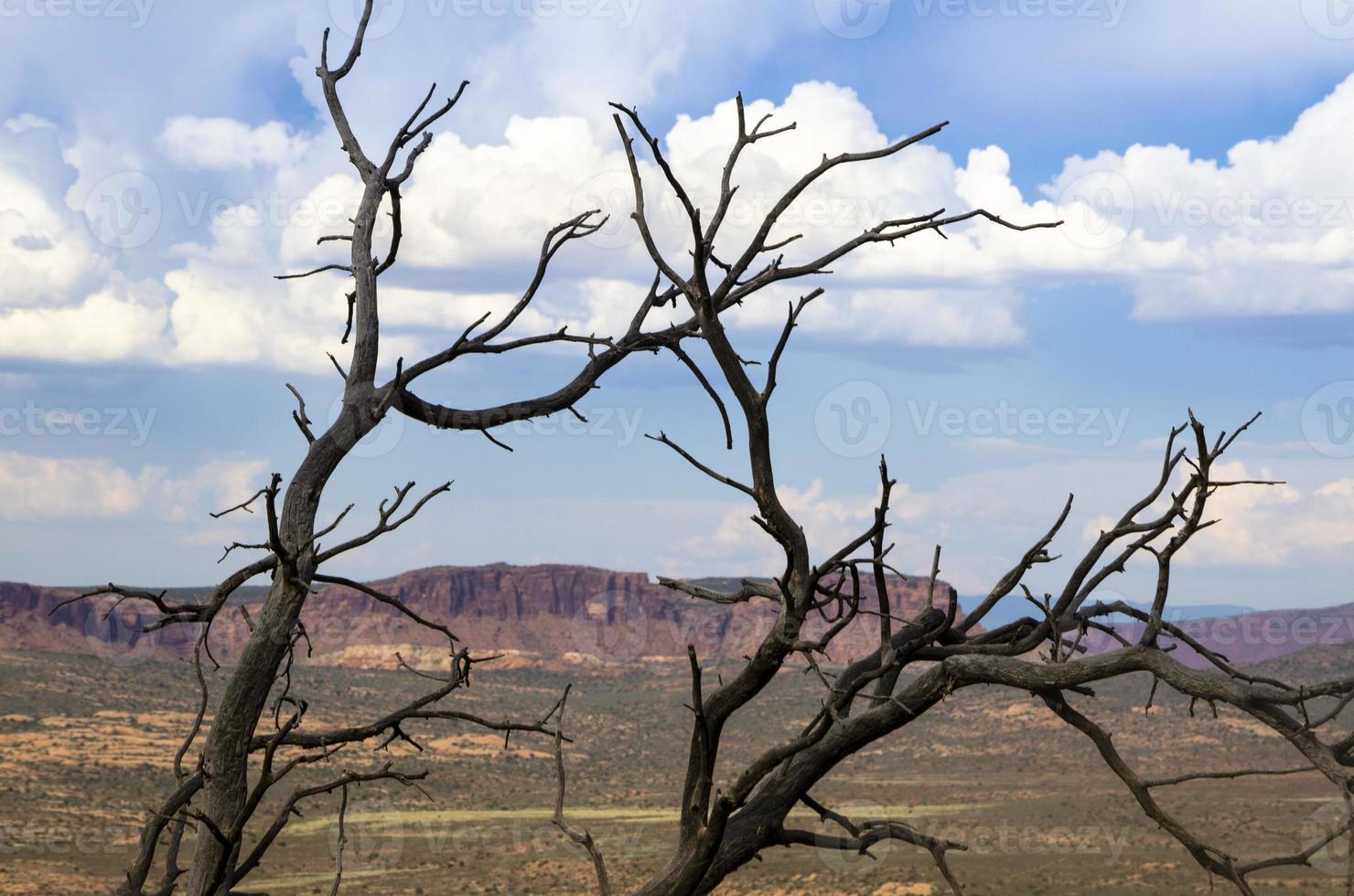 paisagem do deserto de árvore morta foto