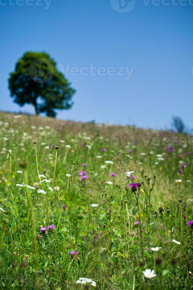 paisagem de primavera na montanha. foto