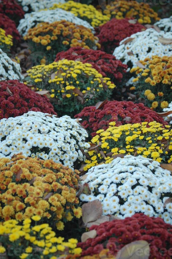 flores de outono foto