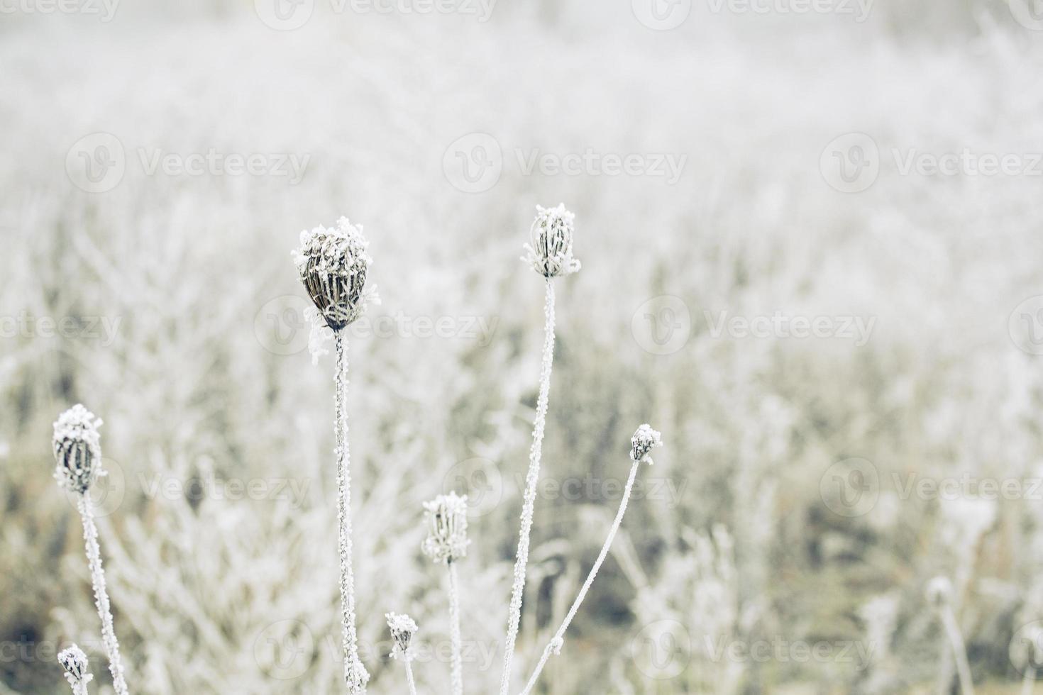 campo de inverno foto