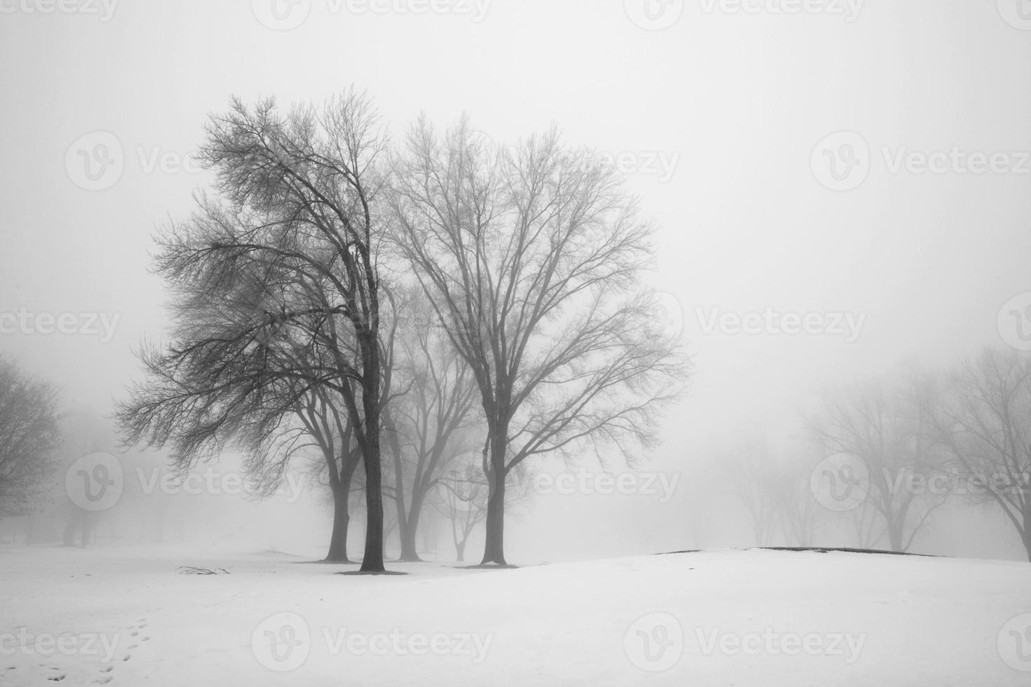 manhã de inverno foto