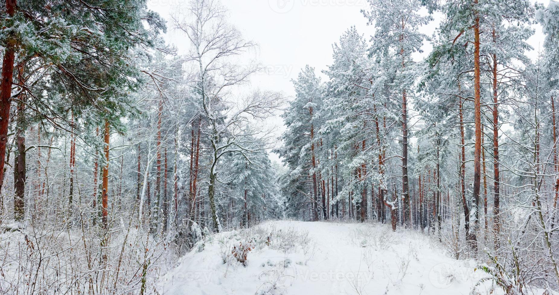 floresta de inverno durante uma queda de neve foto