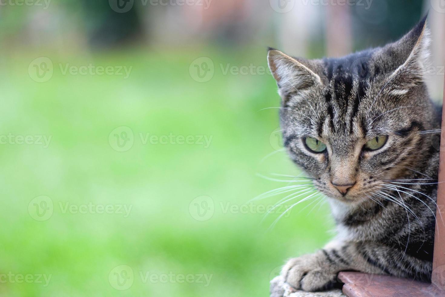 gato ao ar livre foto