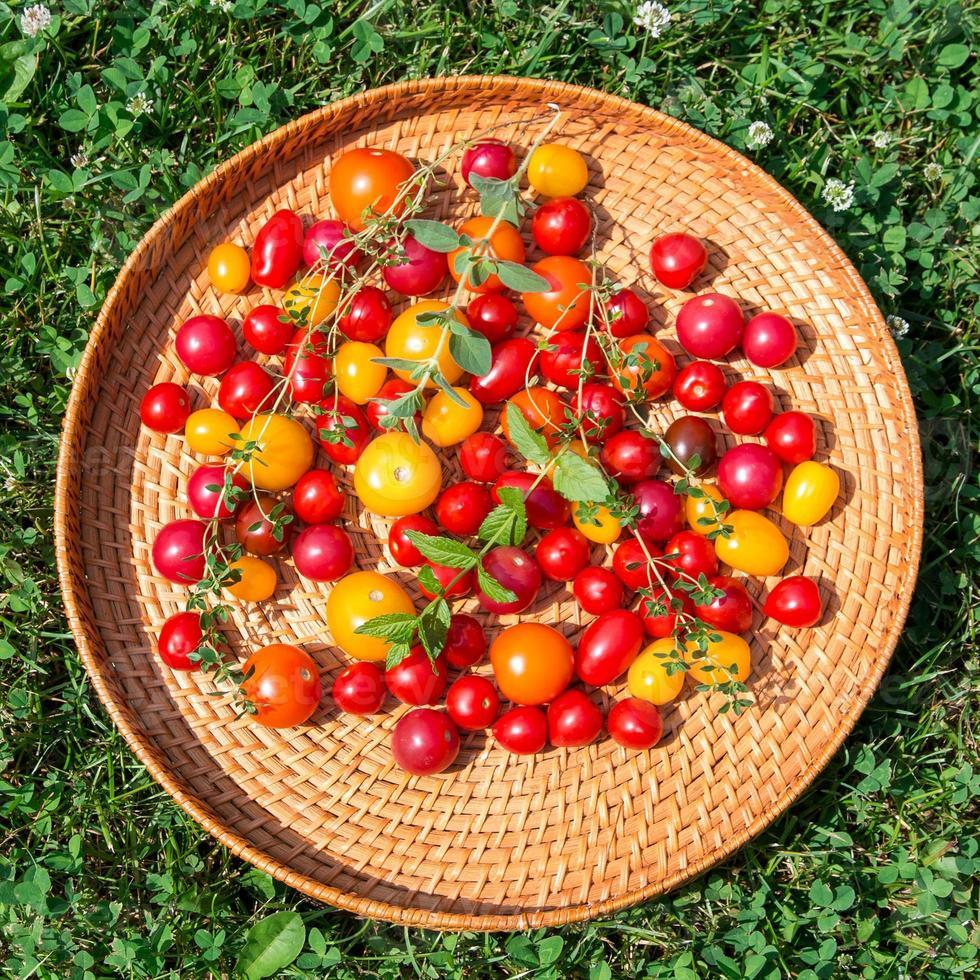 tomates coloridos sortidos foto