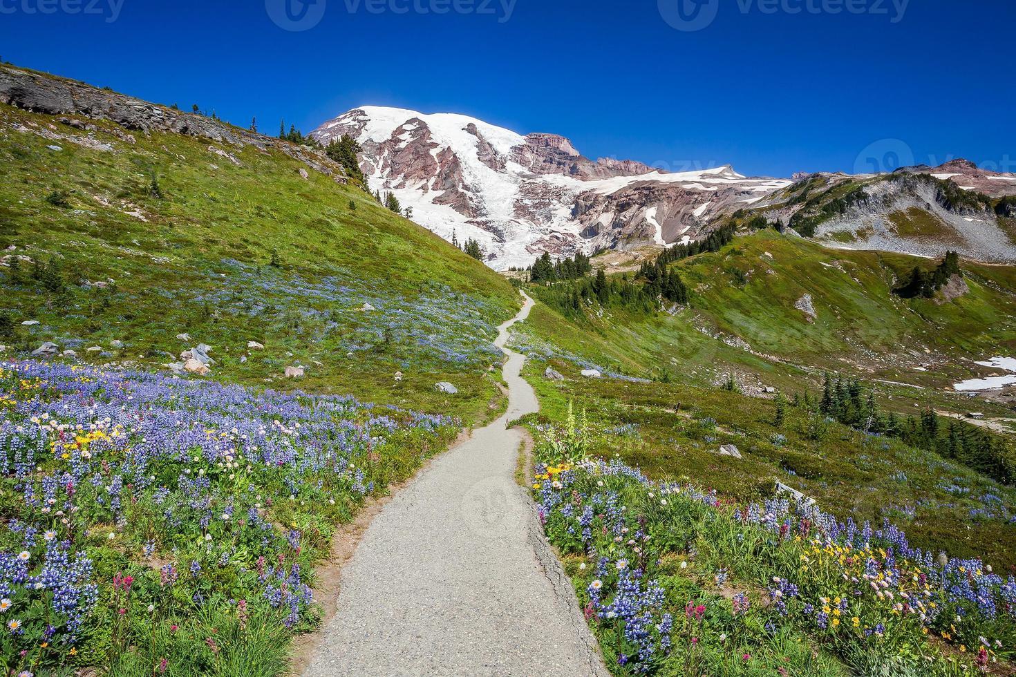 trilha para o Monte Rainier foto