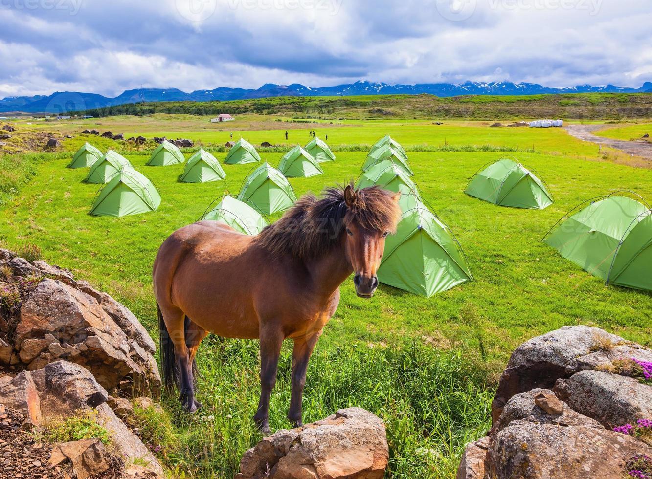 dois cavalos islandeses descansam foto