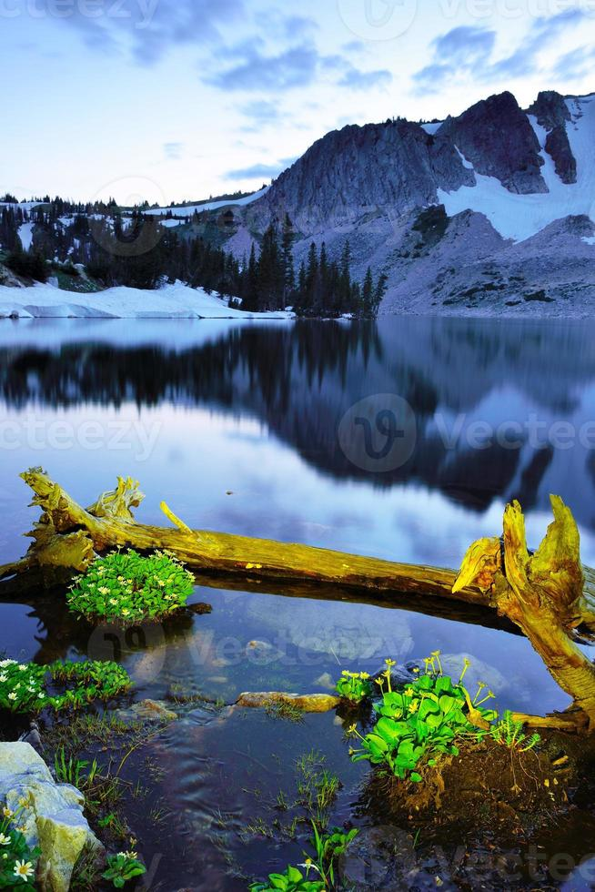 flores silvestres e lago nas montanhas nevadas foto