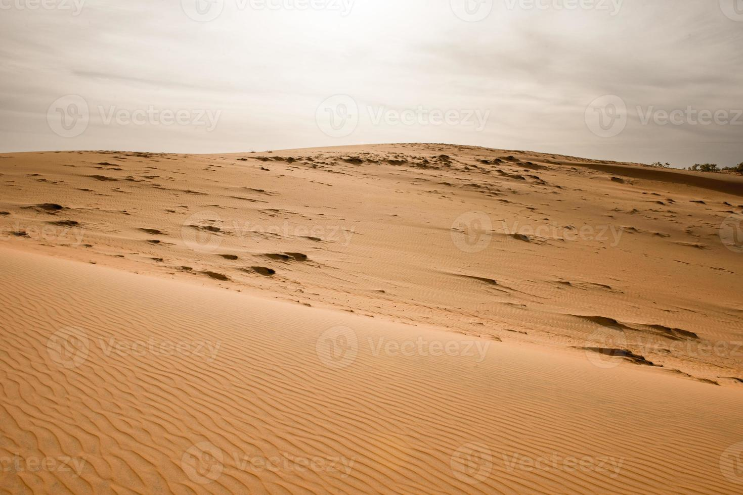 deserto do Saara foto
