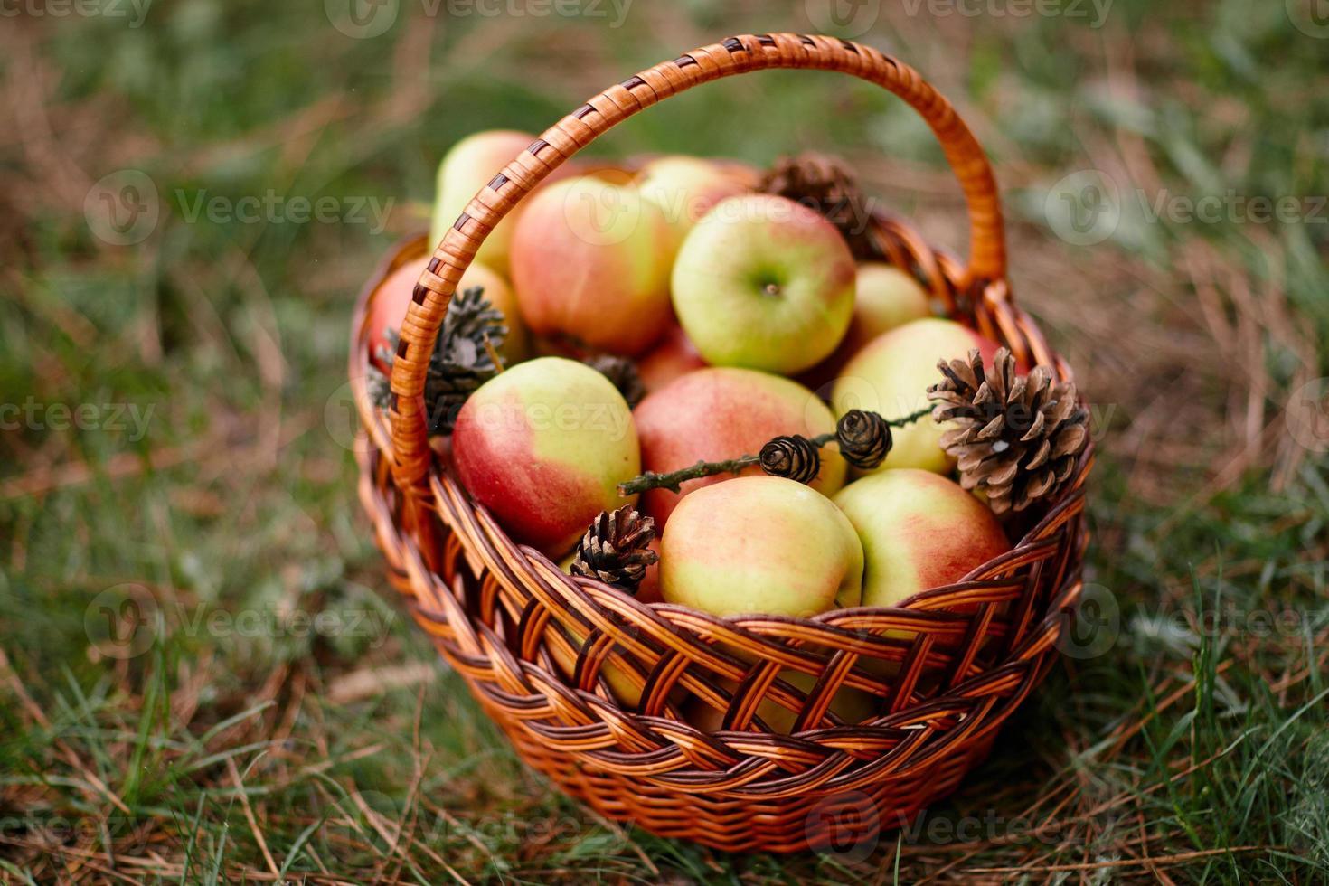 cesta de vime com maçãs em uma grama verde foto