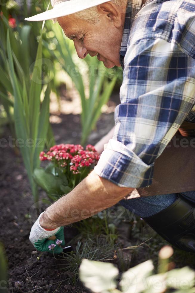 hora de novo solo para a minha flor foto