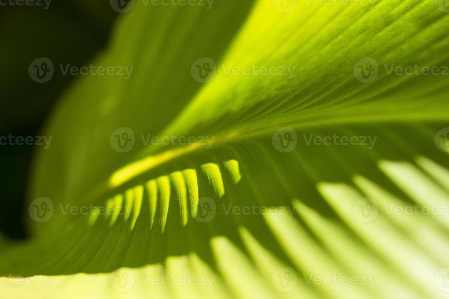 folha, close-up foto