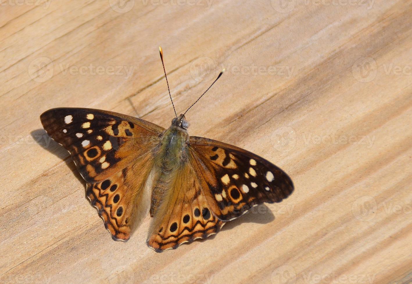 borboleta de perto foto